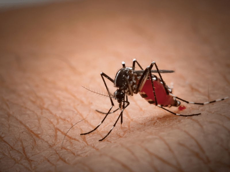 What is Malaria and what are the different ways to prevent it?